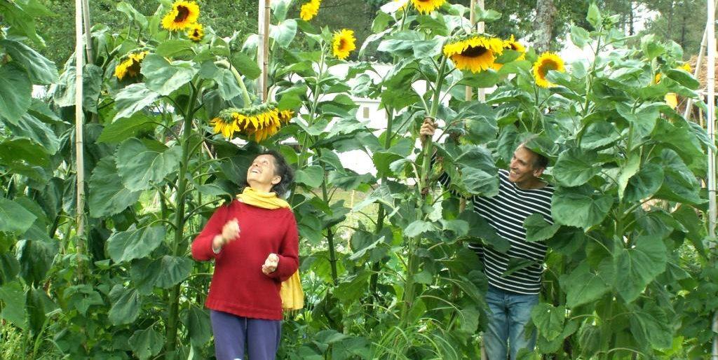Permalien vers:Premier jardin en Bretagne