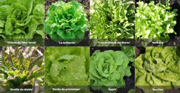 Jardins : semis, haie de saules, jardin botanique...
