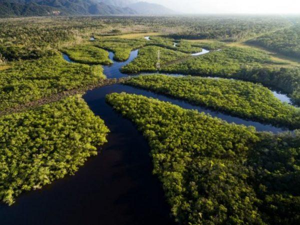 Se mobiliser pour la forêt, la Colombie en exemple ...