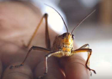 Comment établir un lien avec les insectes