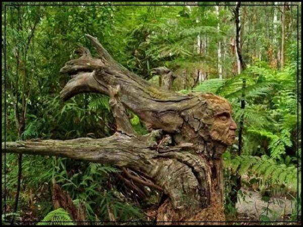 Nature et écologie profonde